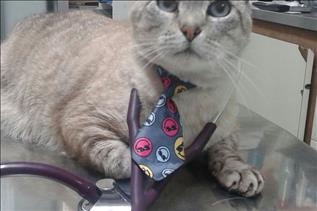 Imagen principal de Adiestramiento felino
